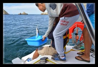 la pêche ... une nouvelle vocation pour Steph