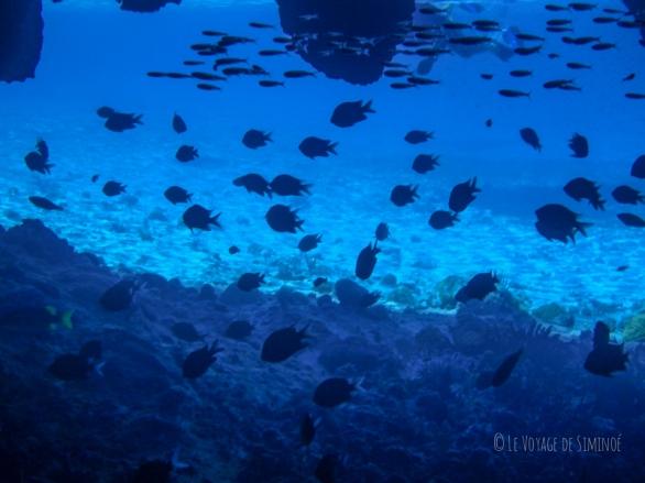 Staniel Cay Thunderball Cave